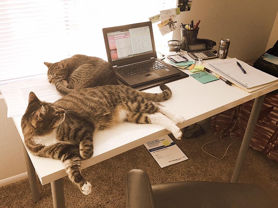 cat-clerks